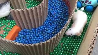 Funny Hamsters Running In Maze Race-  Hamster my pet
