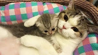 Aww Super Cute ♥ Funny Cats and Dogs Compilation ♥ #17