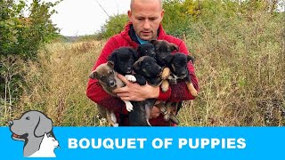 Six Puppies Rescued from Bushes