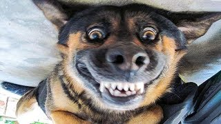 Ultimate Funny Dog Videos Compilation – Cute & Hilarious Puppies