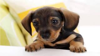Top 10 cute Dogs in the World
