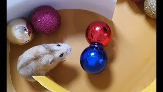 My Funny Pet Hamster in Tower Maze – Obstacle Course for Hamster