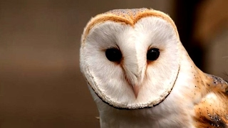 Owl Bird (Cute Owls)