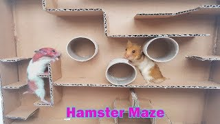 My Funny Pet Hamster Creative Maze – Two Cute Hamsters Running Maze Race | Life Of Hamster