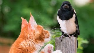 Birds and Cats Playing Compilation (2018)