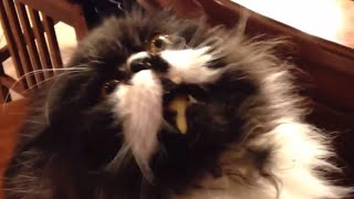 Cat gets brain freeze – funny cats getting brainfreeze compilation