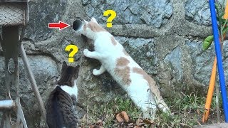 Funny Cat Compilation From Our Cat Garden