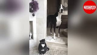 Funniest Pets #4😁 🐼 – TRY NOT TO LAUGH 🐑 – Funny Cats and Pets' Life 2019 | TopTube Trending