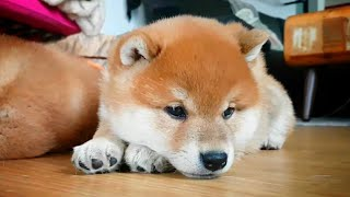 Why is puppy sad?