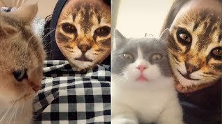 😂 Cats' Hilarious Reaction When They See Cat Filter On Owners' Faces | Cute VN