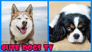 Funny Cute Dogs And Puppies Compilation – Ultimate Funny Dogs & Cute Puppies