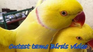 Adorable cute & funny tame birds – Cutest tame Birds video Compilation