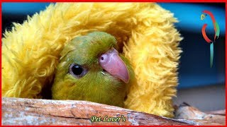 Funny Pet Birds Singing and Doing Funny Humorous Thing
