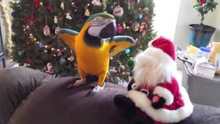 Funny Bird Bloopers Compilation