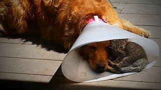 Cute Cats and Dogs 😻🐶 Cats and Dogs Friendship (Part 1) [Funny Pets]