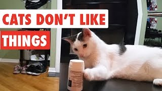 Cats Don't Like Things | Funny Cat Video Compilation 2017