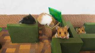 My 15 day Old Hamsters first exploring Minecraft maze REAl LIFE – LOH