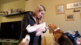 Our Family and Cute Dogs Welcoming our Newborn baby Amelia