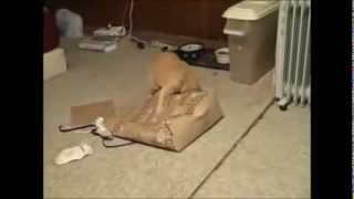 Funny Cats Better Than Funny Pranks Funny Cat Videos