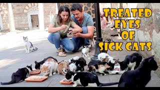 We Treated the Eyes of Sick Cats (Cute Cats – Cute Kittens)