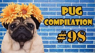 2018 NEW ! Pug Compilation 98 – Funny Dogs but only Pug Videos | Instapugs