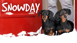 Ep 4. The Dogs Get a SNOWDAY!! – Cute Wiener Dog Video Snow Day