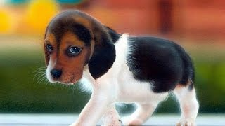Top 10 Cute Dogs