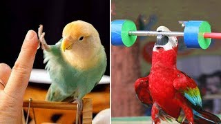 Cute Parrots Doing Funny Things #2 🦜 Funny Parrots and Cute Birds Compilation | Funny Cute Animals