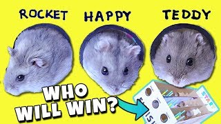 FUNNY HAMSTER RACE! Diy Obstacle Course from Cardboard for Hamsters – EASY!!