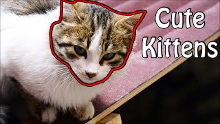 Cute cats chasing mischief as always – Cute Kittens