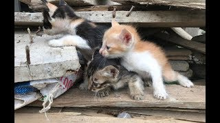 Three kittens abandoned in the rubble | Rescue the pitiful newborn kitten trapped in rotten wood