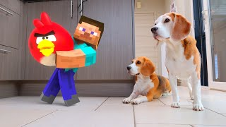 REAL LIFE MINECRAFT vs MY DOGS! Funny Dogs Louie & Marie