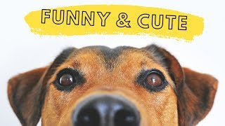 FUNNY CAT & DOG VIDEOS COMPILATION #5