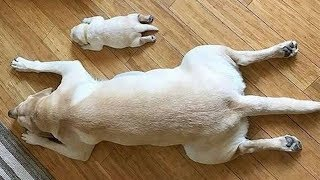 Funny Puppies And Cute Puppy – Cute Dogs And Puppies Doing Funny Things | Puppies TV