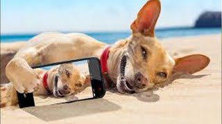 🔴 Funny Cats and Dogs Videos Compilation Cute Moment of The Animals 47