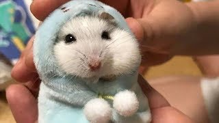 Funny Hamsters Videos Compilation #6 | Cute and Funny moments of the animals – Cute TV