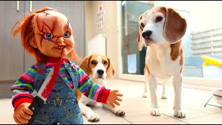 Dogs vs Little Chucky Prank : Funny Dogs Louie & Marie