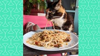"Funny Cats Say "" Nom Nom Nom "" while Eating –  Cute Cat Videos"