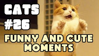 I've hungered for your touch 🐈 CATS 🐾 Funny and cute moments Ep.26