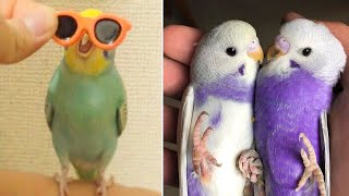 Baby Animals 🔴 Funny Parrots and Cute Birds Compilation (2019) Loros Adorables Recopilación