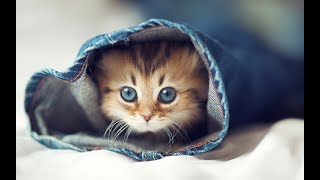 Cute Cats And Kittens || Cutest Cats Compilation 2018 || Best Cute Cat Videos Ever || TFV360
