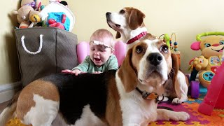 Big Sister Teaches Baby How to Pet and Love Dogs | Cute Dogs are Patient with Baby