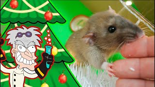 My Funny Pet Hamster RAT escape from crazy Professor's giant lab  maze labyrinth MERRY CHRISTMAS