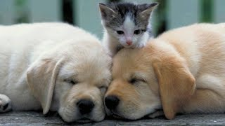 Cutest Puppies And Kittens In The World – Cute Dogs And Cats Doing Funny Things 2020   Puppies TV