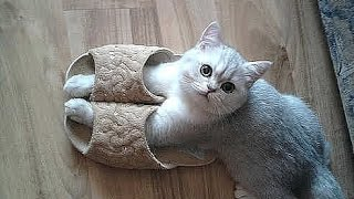 Best Funny cat and kitten – TOP Funniest cats in the world videos Compilation 2016