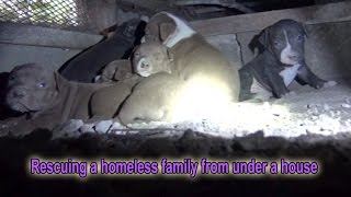 Sansa & puppies: Rescuing a homeless family from under a house.  Please share  :-)