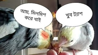 Funny Birds Video
