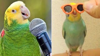 Baby Animals 🔴 Funny Parrots and Cute Birds Compilation (2019) Loros Adorables Recopilación #5
