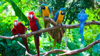 colorful birds- colorful parrots- colourful birds  African wildlife  Video 2016