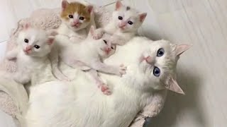 Mommy Cat and Her Tiny Kittens Will Totally Warm Your Heart